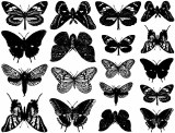Butterflies Decals Black