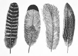 Feather Decals Black
