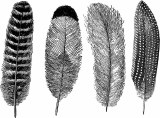 Feathers Cone 6 Decal