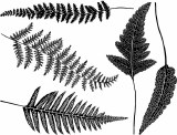 Ferns Decals Black
