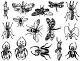 Insects Decals Black