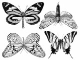 Large Butterflies Decals Black