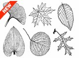 Large Leaves Decals Black