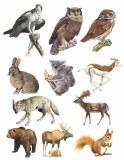 Overglaze Animals