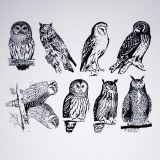 Owls Decals Black