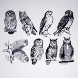Owls Decals White