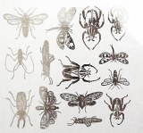 Silver Luster Decal, Insects