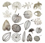 Silver Luster Decal, Leaves