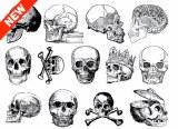 Skull Decals White
