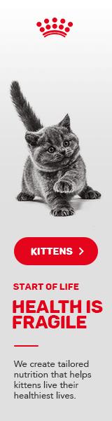 Royal Canin Kitten Side