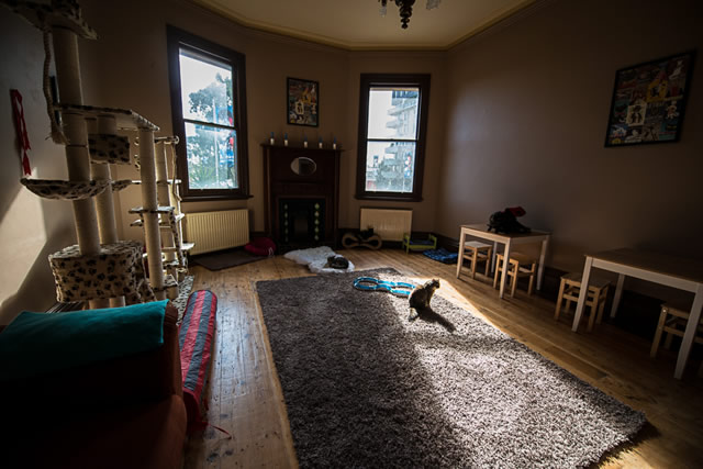 cat_cafe_melbourne_large_room!