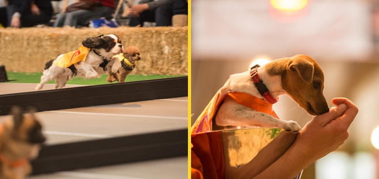 Dogs having funs at the Dog Lovers Show event in Melbourne 2014