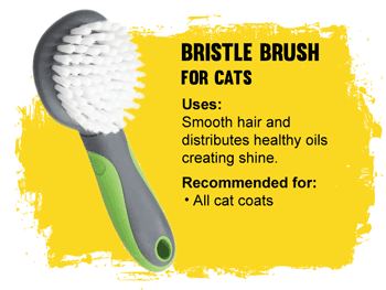 Grooming Bristle brush for cats