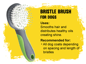 Grooming Bristle brush for dogs