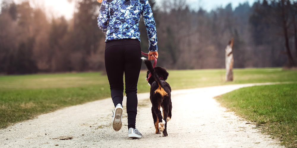 Active lifestyle for your dog