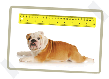 Measure your dog - what size dog bed?