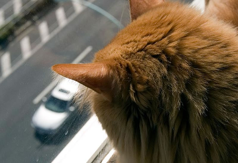 car travel tips with cats