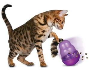 Best Toys For Indoor Cats - Kong Wobbler for cats