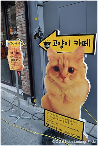 Cat Cafe this way!