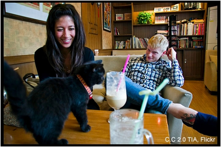 A couple with their cat at a Cat cafe!