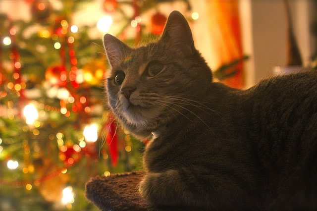 A sturdy Christmas tree is a must should your cat jump on it