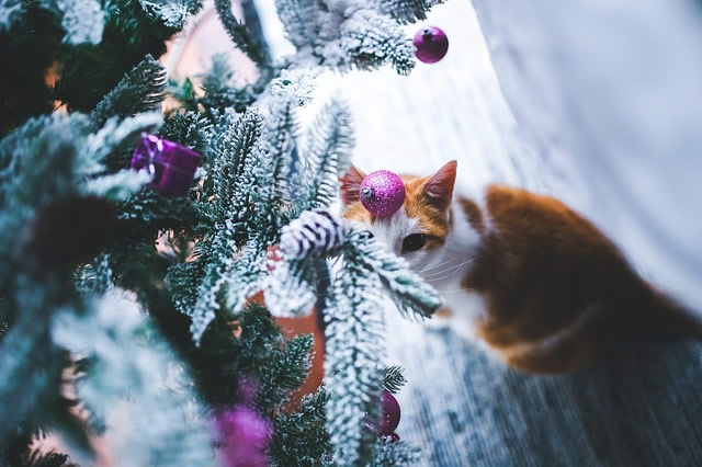 Christmas trees are naturally tempting for cats