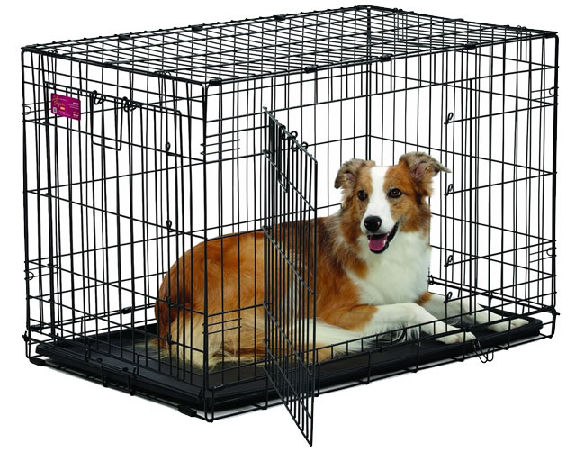 Crate training your dog