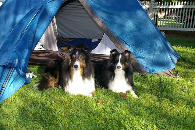 two dogs camping