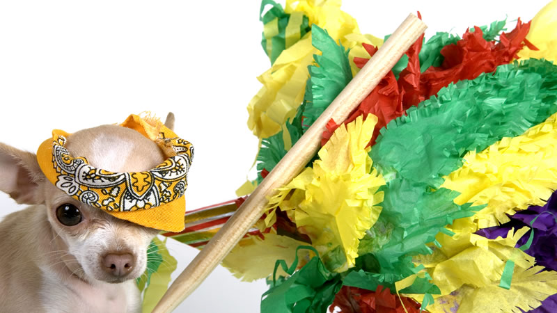create a make-shift pinata full of yummy dog treats