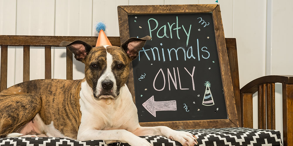 Hosting a birthday party for your dog