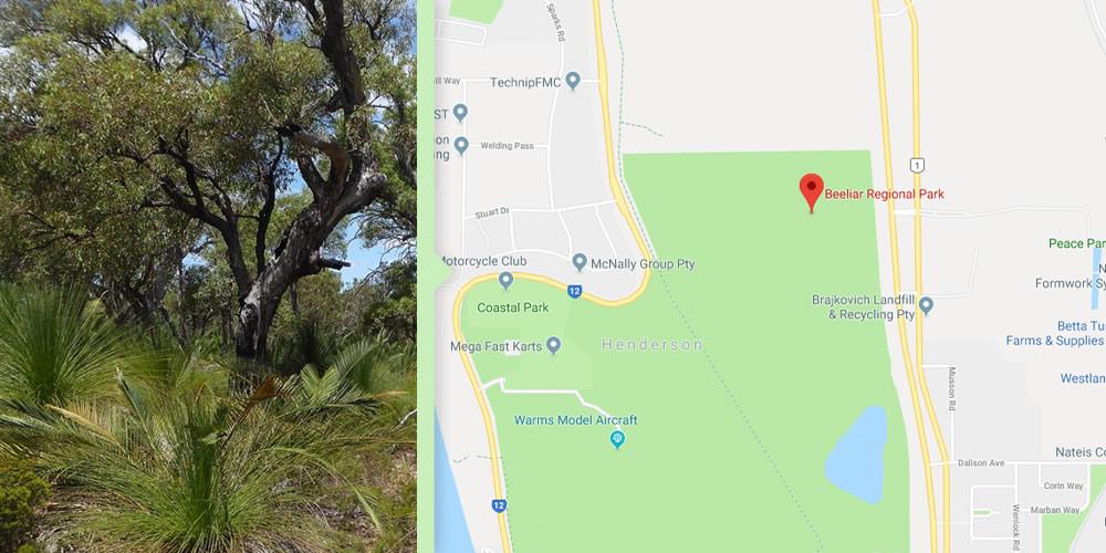 Dog Walks Perth - Beeliar Park
