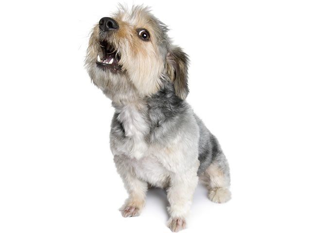 how to stop your dog barking