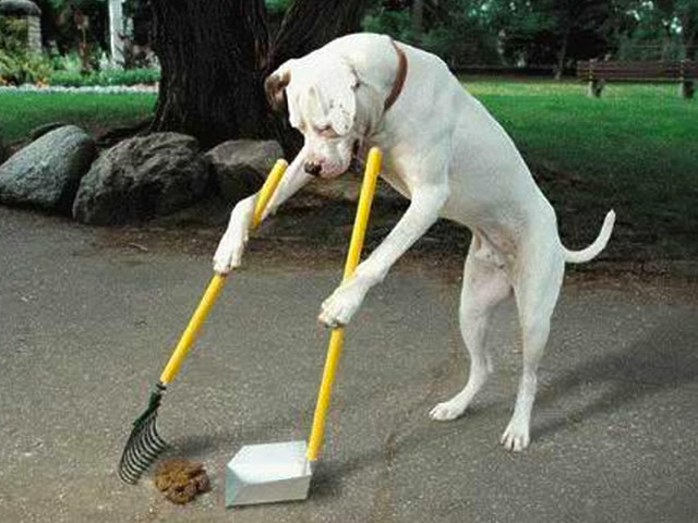 dog cleaning his own poop