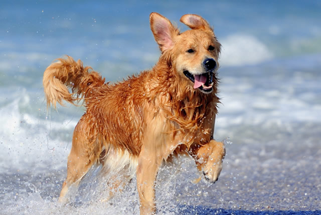 Dog - Exercise Feels Good