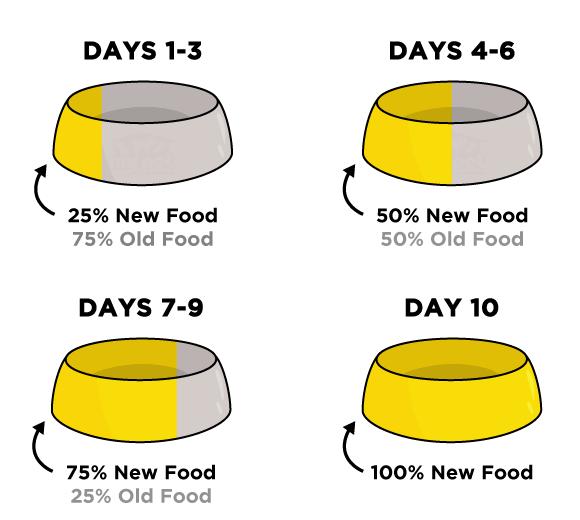 Dog food transition period