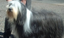 Long Haired Breeds
