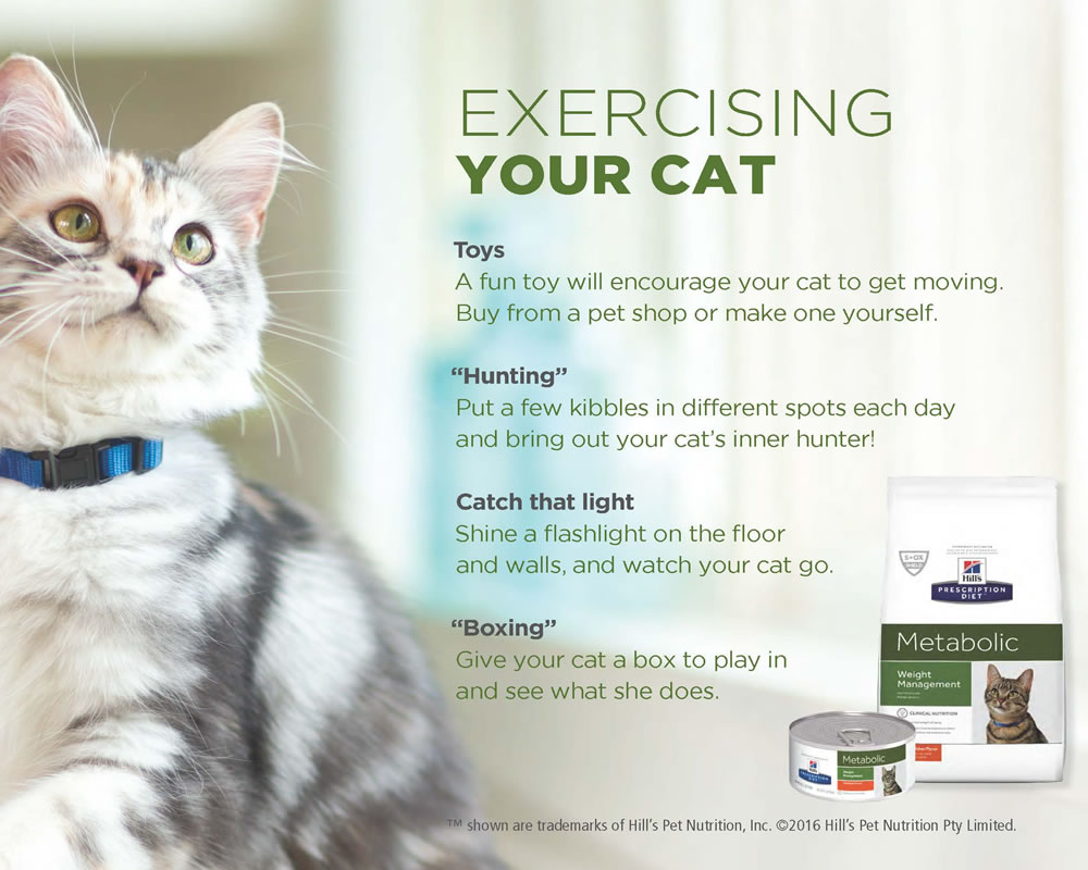 Exercising your cat