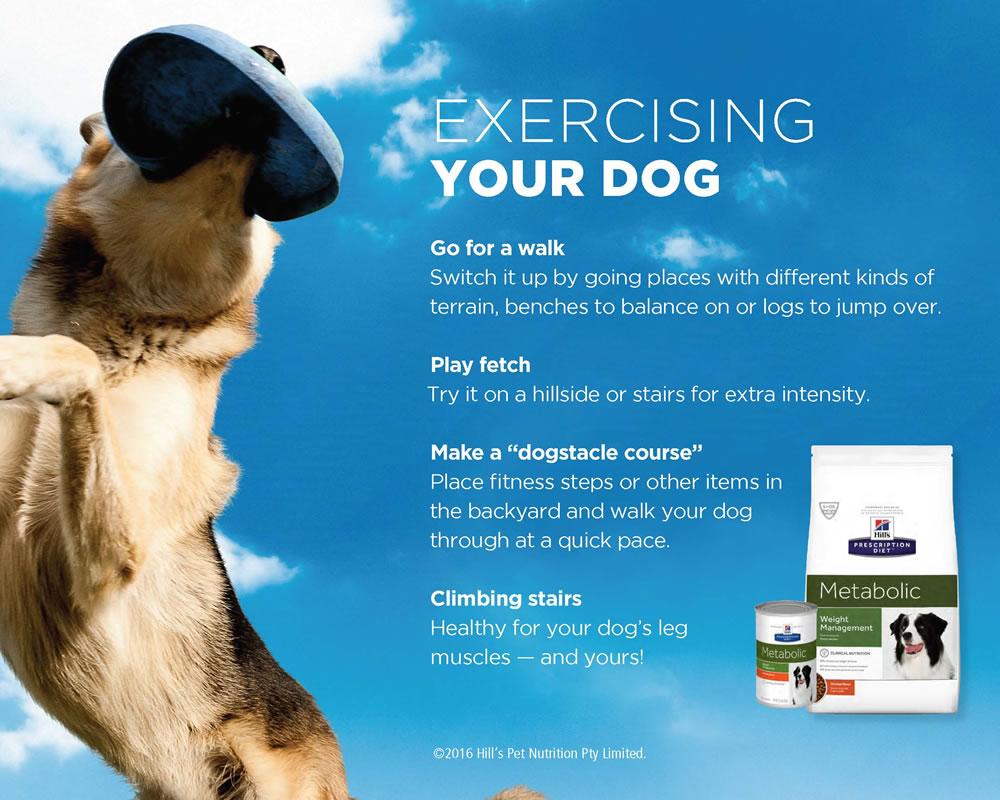 Exercising your dog
