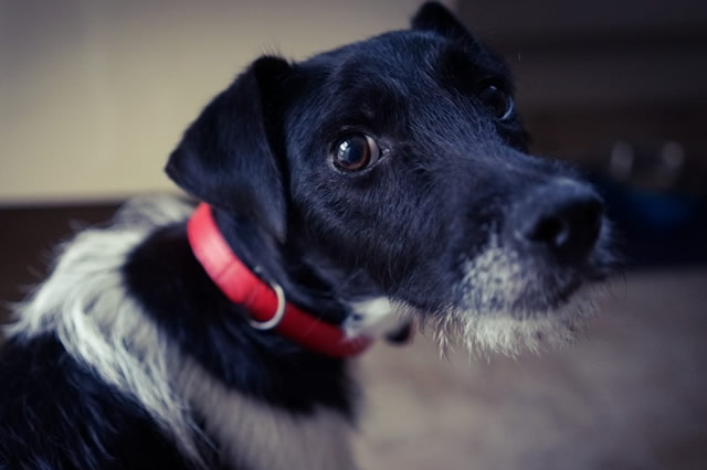 Does your dog suffer from an eating disorder!