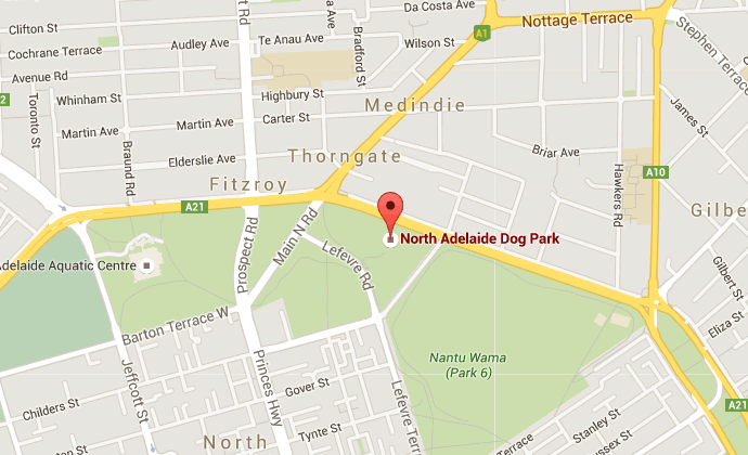 Off Leash Dog Park - North Adelaide
