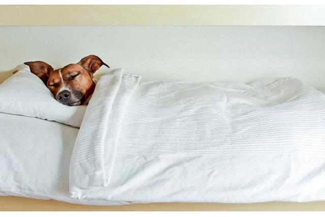 Dog fast asleep!