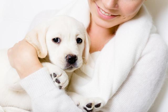 Pet Labrador!