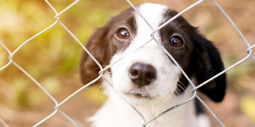 Consider a rescue dog or puppy