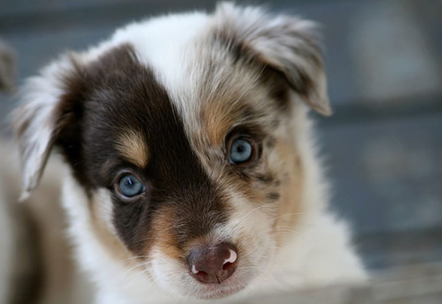 A young puppy