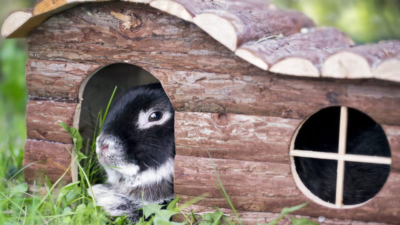 A pet rabbit in a hutch