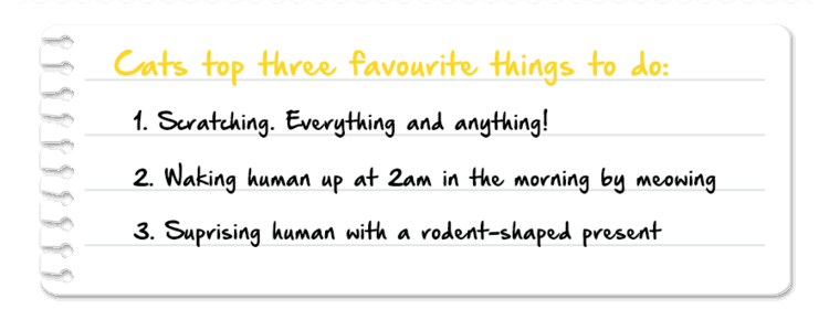 Cats top three favourite things to do!