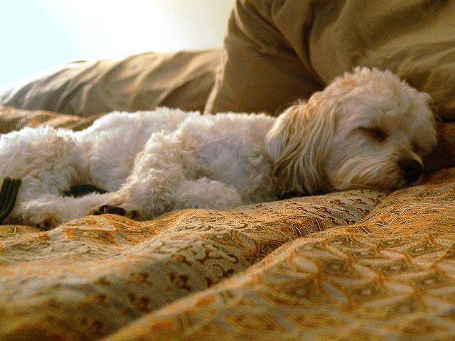 how long do dogs sleep for?