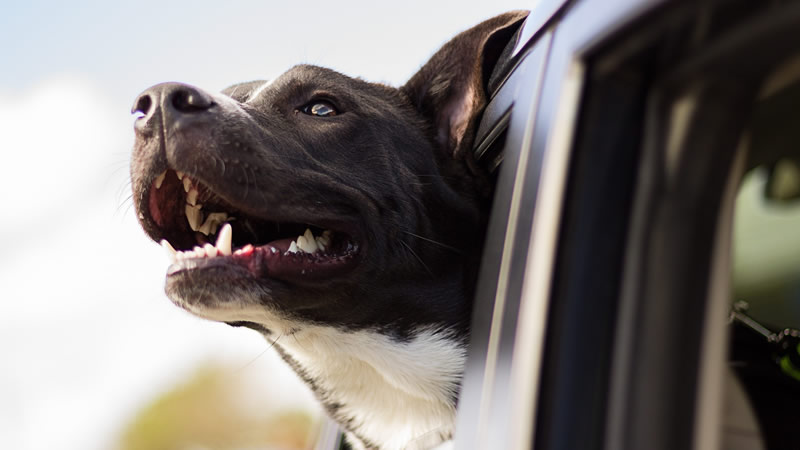 traveling with your dog in cars