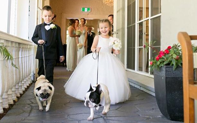 Kayla and Troy's little helpers at Bram Leigh Wedding Receptions - Courtesy of Wedding Paws
