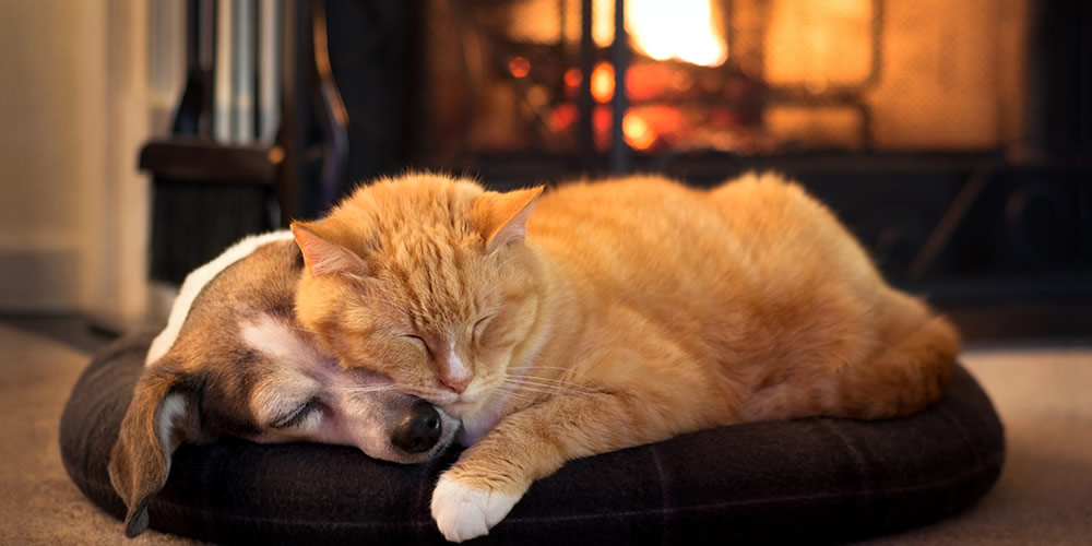Keep your pets warm in winter